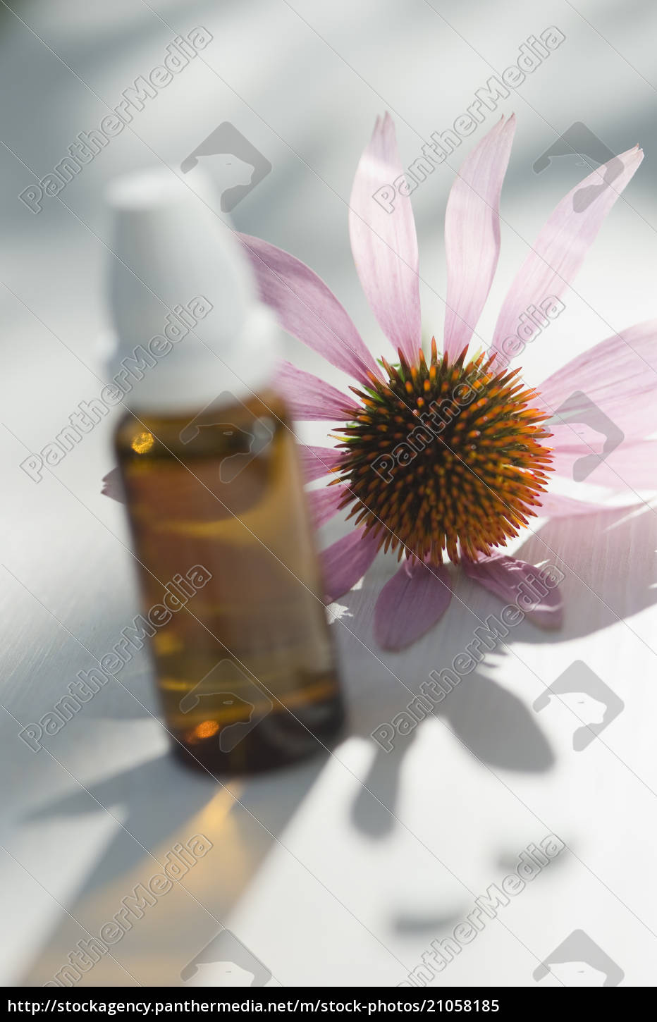 purple, coneflower, , echinacea, , and, flask, with - 21058185