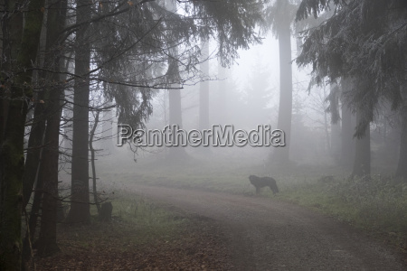 germany hesse dog on forest path