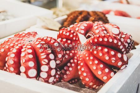 japan tokyo tsukiji fish market octopuses
