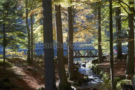 germany baden wuerttemberg black forest feldsee