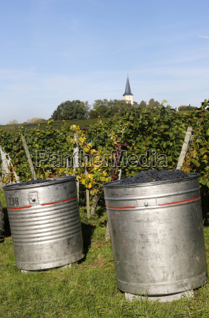 germany baden wuerttemberg pinot noir grape