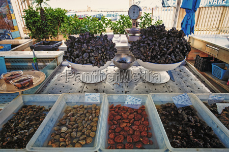 italy apulia variety of mussels in