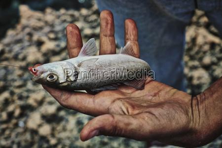 italy apulia man holding fresh fish