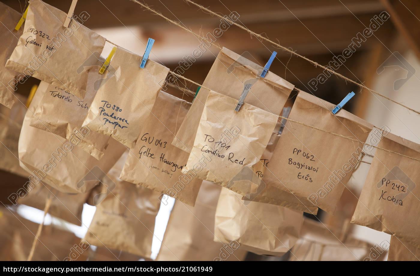 austria, , schiltern, , historical, seeds, hanging, on - 21061949