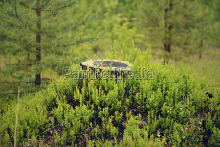sweden stroemsund tree stump surrounded by