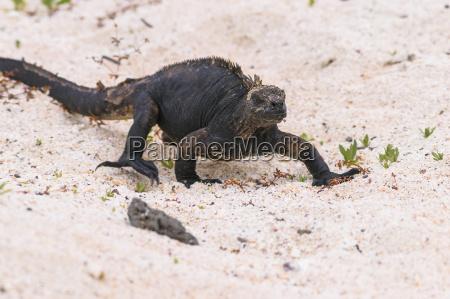 oceania galapagos islands santa cruz marine
