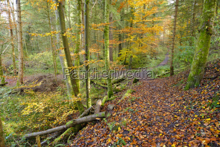 germany bavaria geretsried path in alluvial