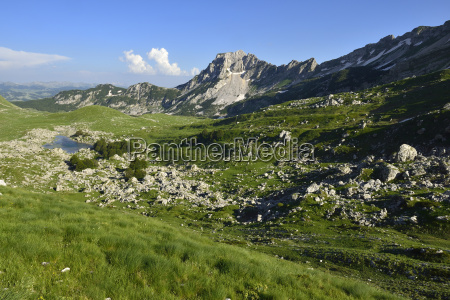 montenegro durmitor national park alpine pasture