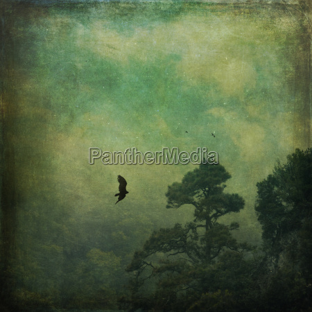 spain canary islands la palma flying