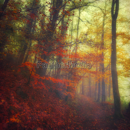 autumn forest on a misty day