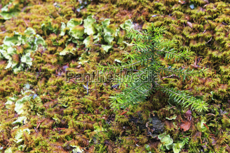 canada british columbia yoho nationalpark small