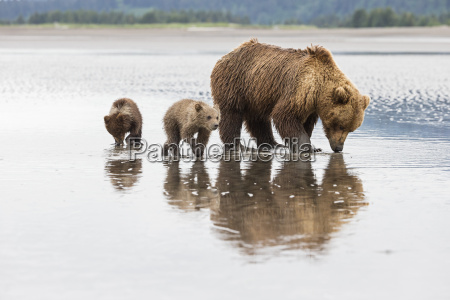 usa alaska lake clark national park