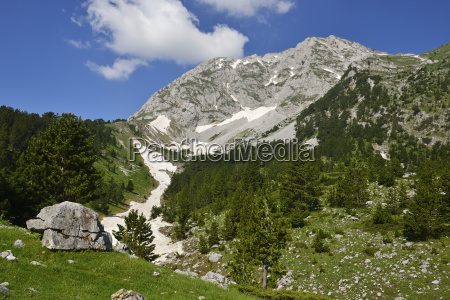 montenegro black pine forest on the