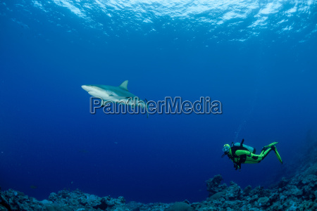 oceania micronesia yap diver with grey