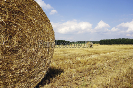 germany bales of straw on field