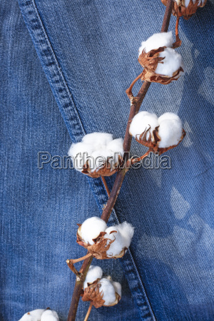 germany cotton plant on jeans