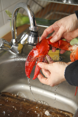 young woman cleaning and washing lobster
