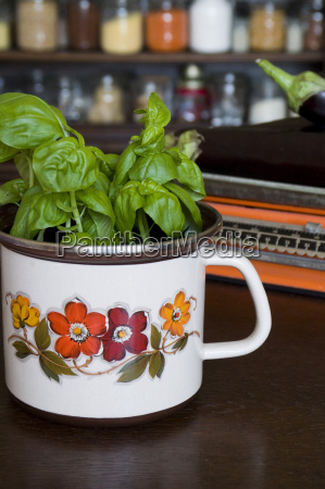 basil plant in an old seventies