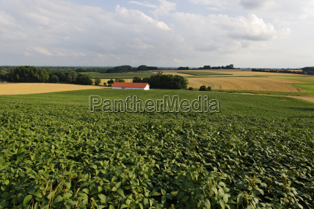germany bavaria view of soybean field
