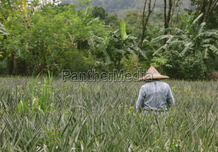 thailand takua pa khao lak farmer