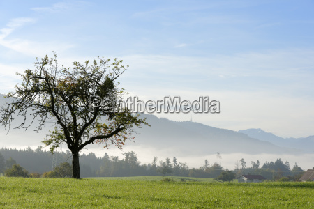 germany bavaria swabia view from meadows