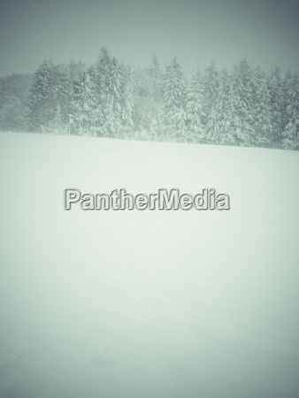 germany black forest winter landscape in