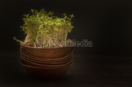 cresses in bowl on wooden table