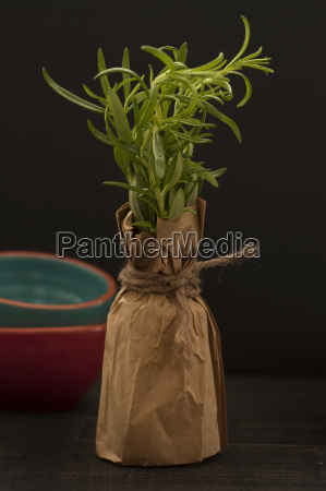 rosemary plant on wooden table close