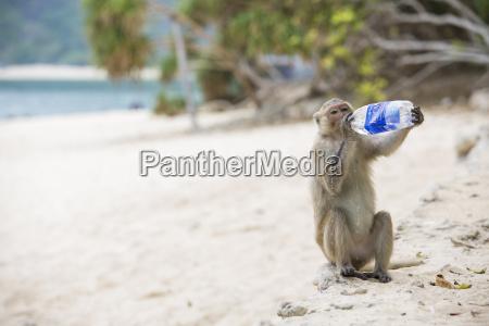 vietnam halong bay monkey island monkey