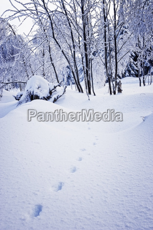 germany harz winter landscape with footprints