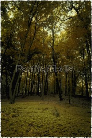 germany lower saxony autumn forest near
