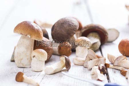 rozne dzikie grzyby porcinis borowik edulis