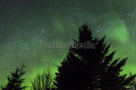 norway lofoten polar lights aurora borealis