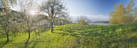 germany, , baden-wuerttemberg, , lake, constance, , sipplingen, , blooming - 21122015