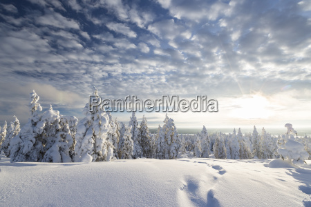 scandinavia finland rovaniemi trees in wintertime