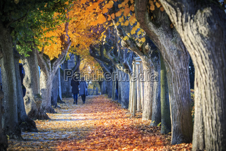 germany bamberg view to autumnal avenue