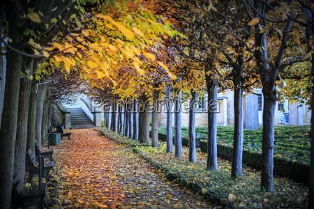 germany bamberg view to autumnal walkway
