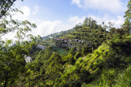 indonesia bali kintamani vegetable cultivation on