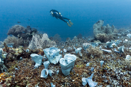 coral reef with blue sponge diver