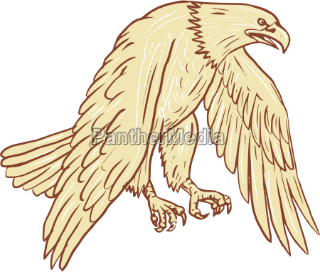 bald eagle flying wings down drawing