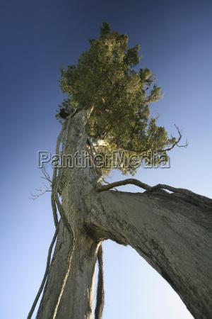 new zealand baobab tree low angle