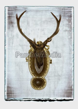 taxidermy of deer head against white