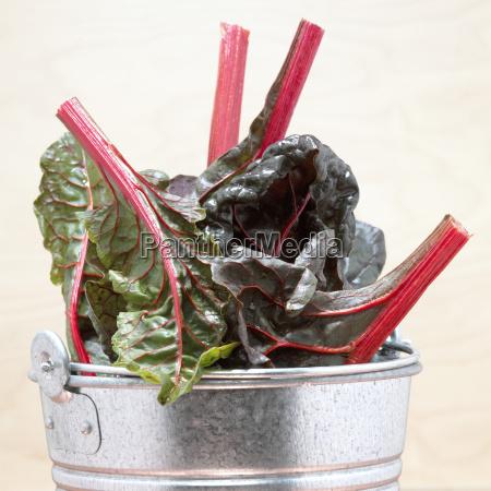 mangold leaves in bucket