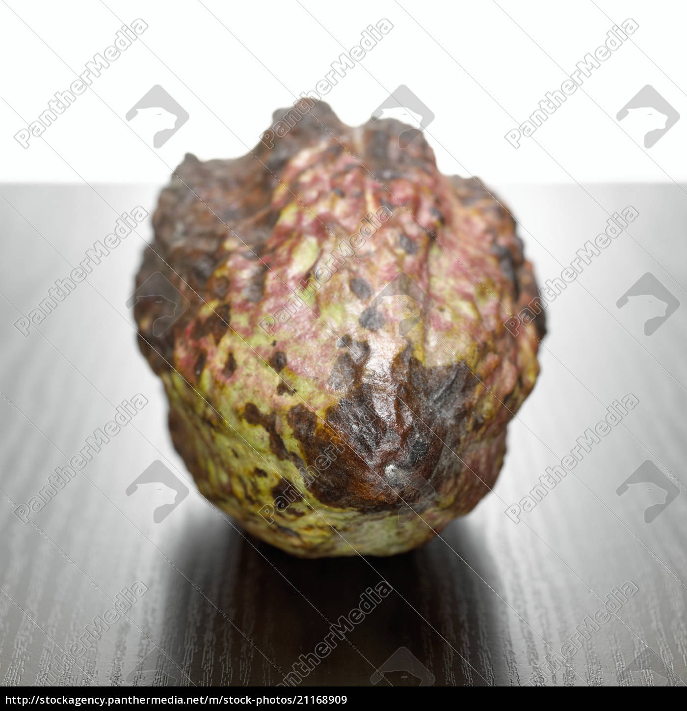 cocoa, pod, , close-up - 21168909