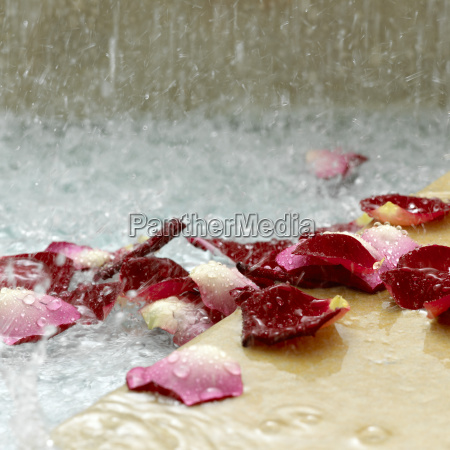 rose petals in water close up