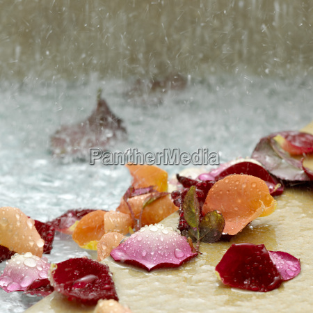 petals of roses with water drops