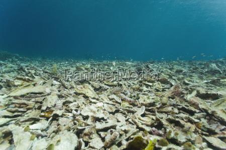 asia indonesia west papua raja ampat