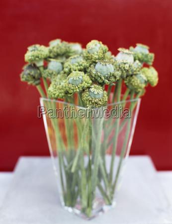 poppy seed in vase