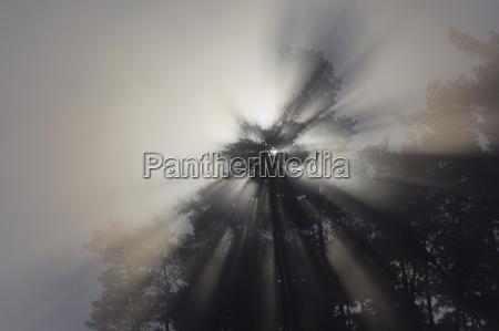 germany sunbeams shining through trees low