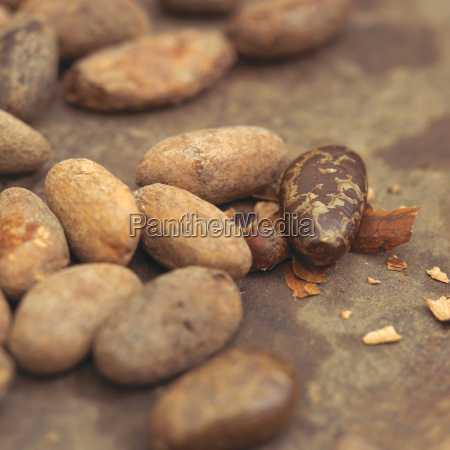 cocoa beans close up